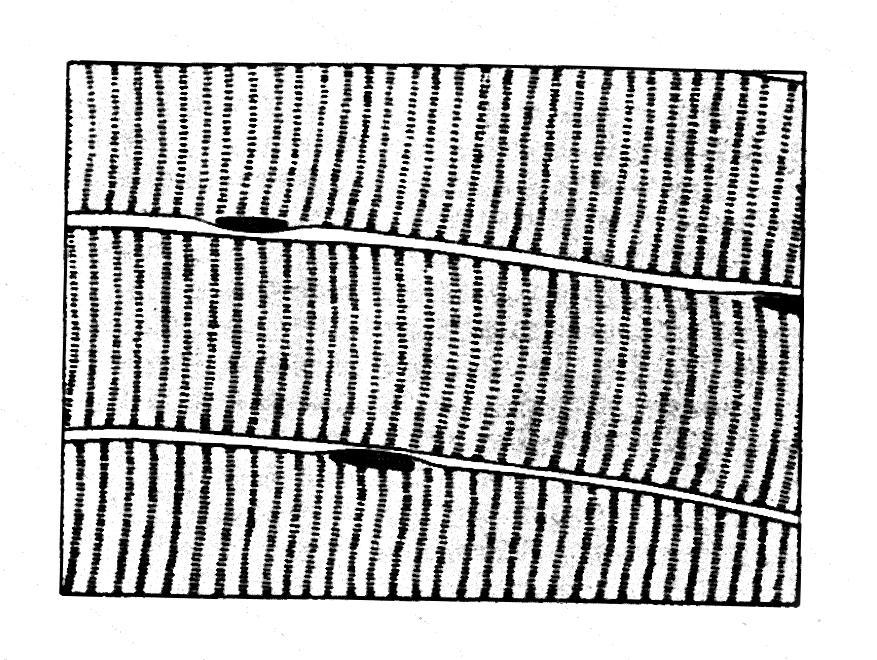 a kötő és izomszövet regenerálása