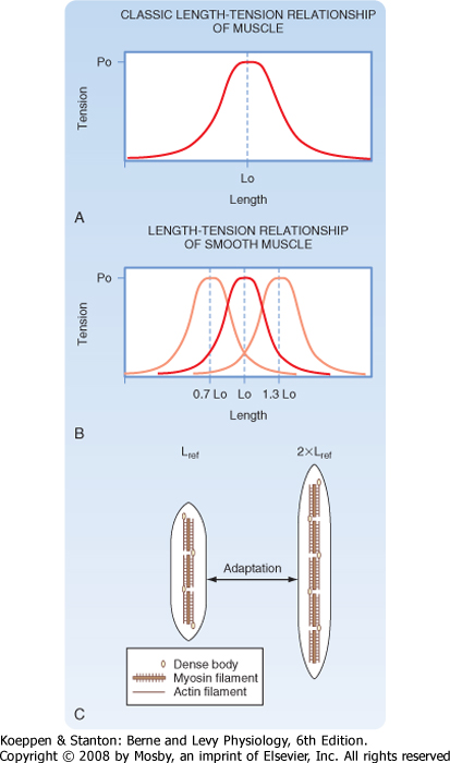 force velocity relationship smooth muscle