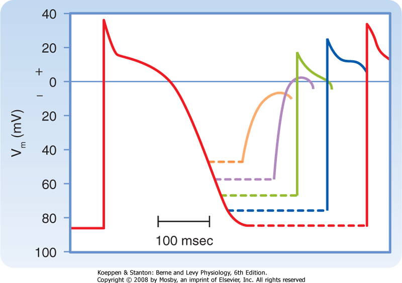 Printed from student consult berne and levy physiology 6e the figure 16 14 changes in action potential amplitude and upstroke slope as action potentials are initiated at different stages of the relative refractory ccuart Choice Image