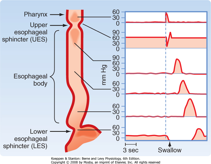 Printed from STUDENT CONSULT: Berne and Levy Physiology 6E - The ...