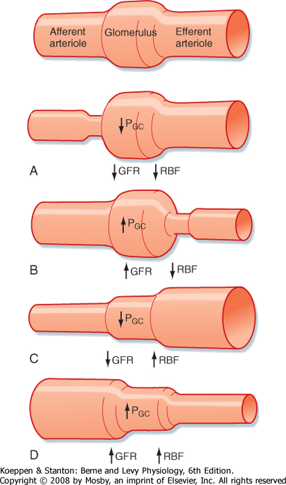 renal blood flow and gfr relationship poems
