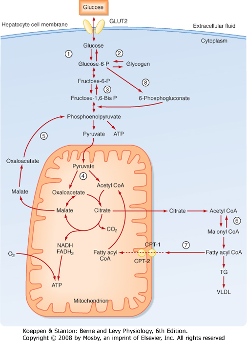 Acetyl-coa Carboxylase Deficiency Acetyl-coa Carboxylase