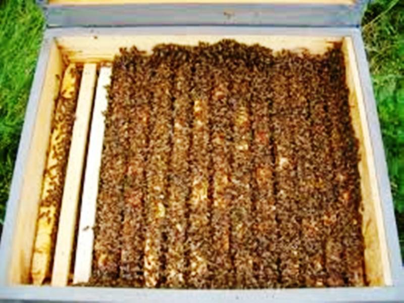 Méhészet kezdőknek