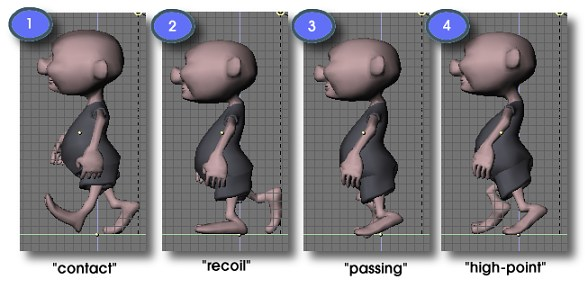 Some common poses in a walkcycle.