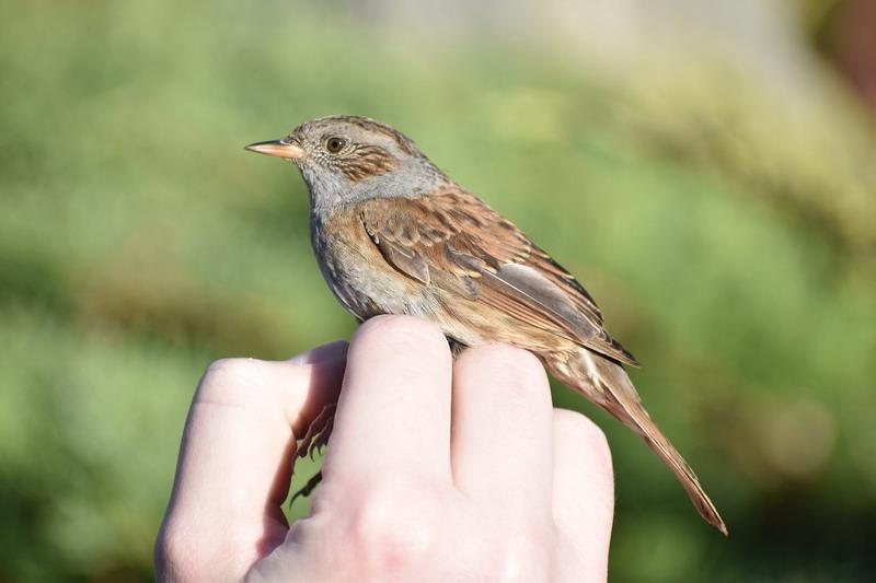 az internetes kereset a madarakat
