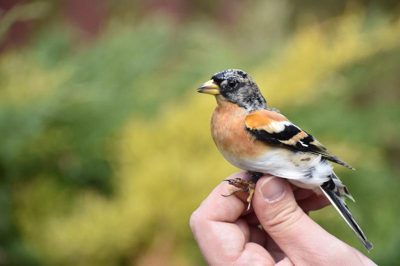 az internetes kereset a madarakat)