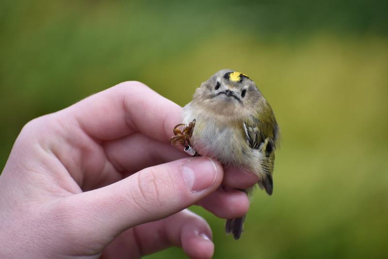 az internetes kereset a madarakat befektetés az internetre befektetés betétekbe
