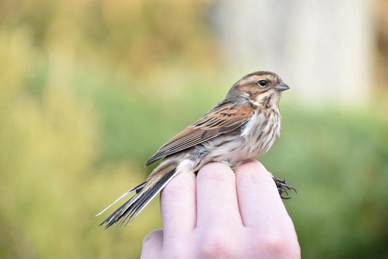 az internetes kereset a madarakat bináris opciók mi mm