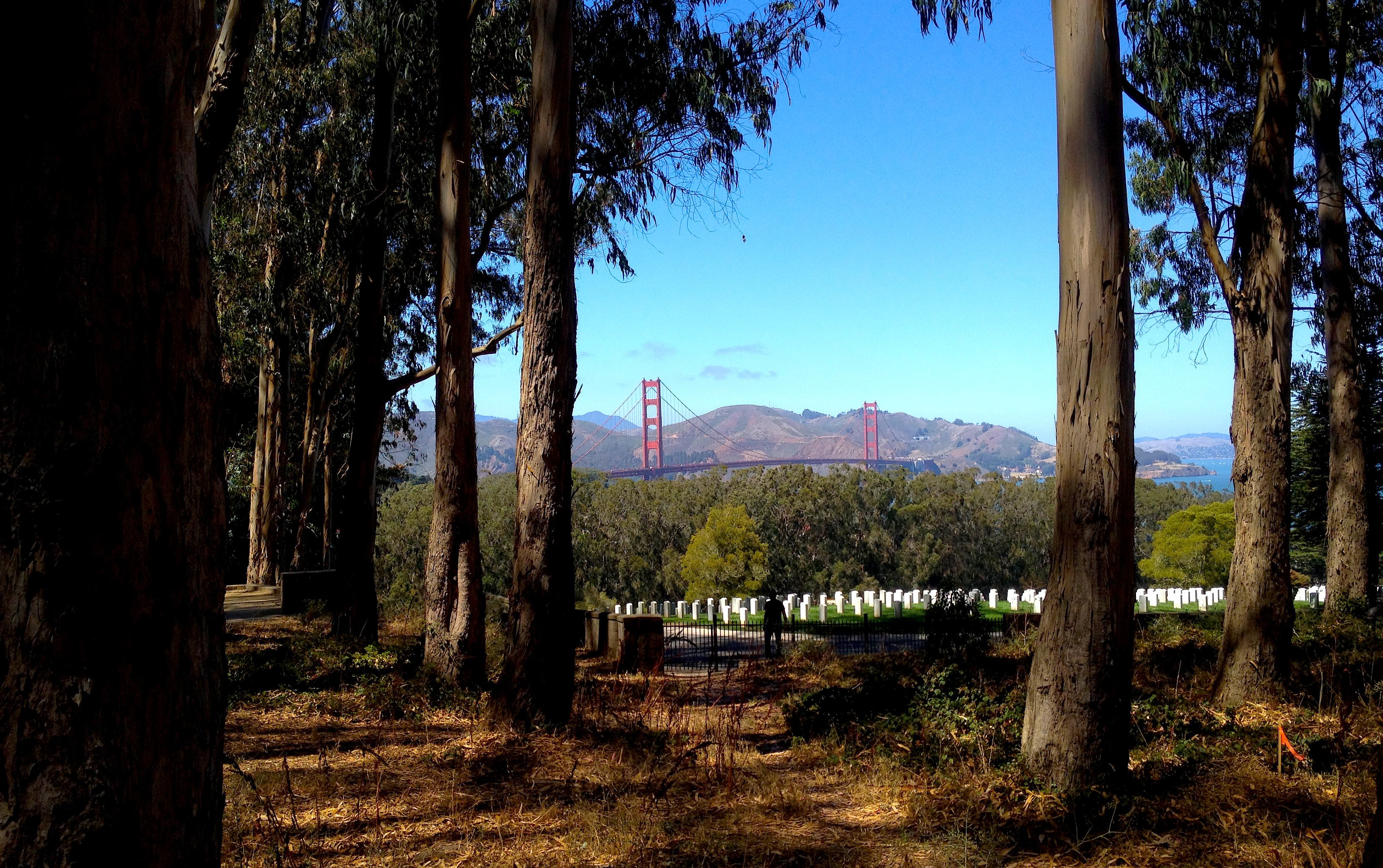 View to the GG from the Presidio