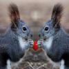 Squirrels Jigsaw