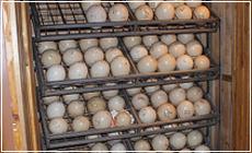 Hogyan rakjuk a tojást a keltetőbe